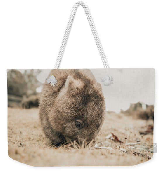 Weekender Tote Bag featuring the photograph Adorable Large Wombat During The Day Looking For Grass To Eat by Rob D Imagery