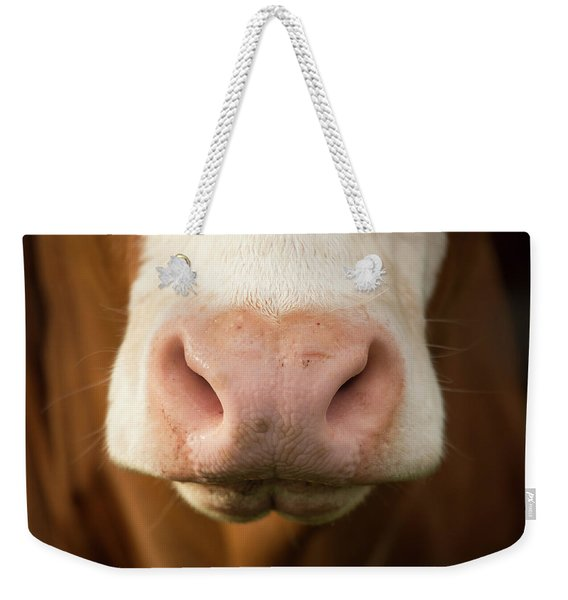 Weekender Tote Bag featuring the photograph Australian Cow by Rob D Imagery