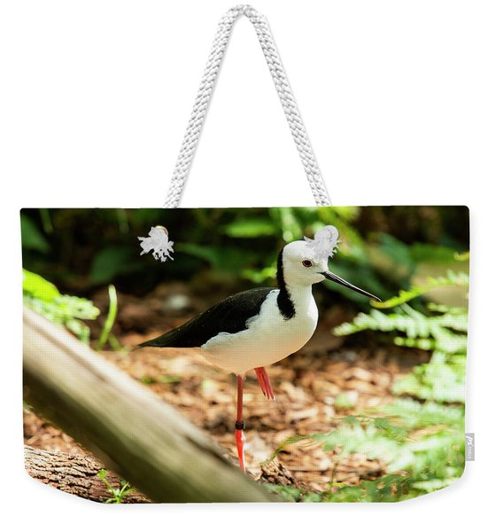 Weekender Tote Bag featuring the photograph Black-winged Stilt by Rob D Imagery