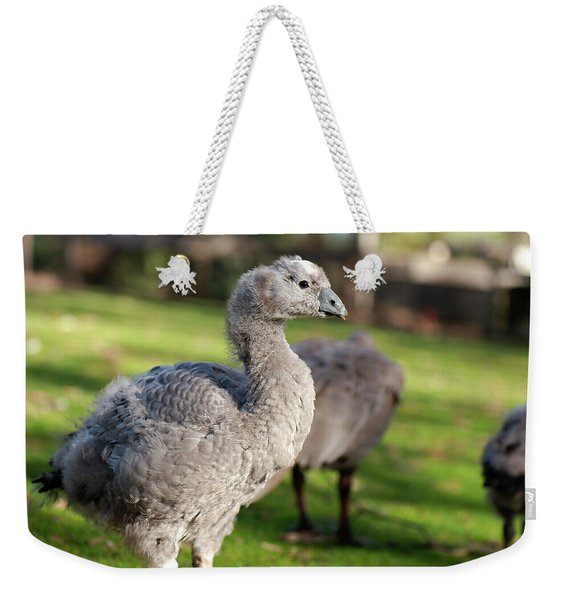 Weekender Tote Bag featuring the photograph Cape Barren Goose And Geese by Rob D Imagery