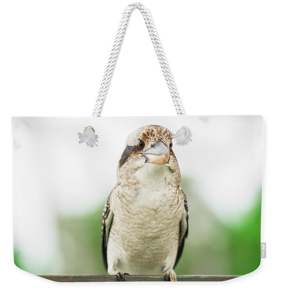 Weekender Tote Bag featuring the photograph Kookaburra Gracefully Resting During The Day. by Rob D Imagery