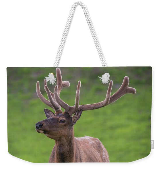 Weekender Tote Bag featuring the photograph ME1 by Joshua Able's Wildlife