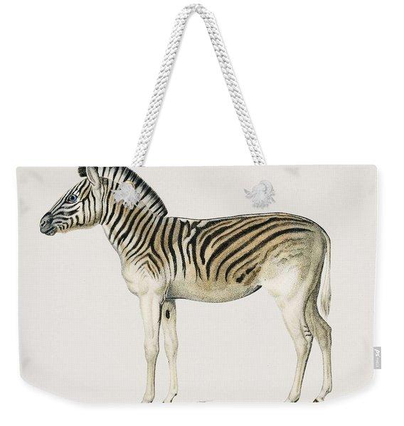 Mountain Zebra  Dauw  Illustrated By Charles Dessalines D' Orbigny  1806-1876  Weekender Tote Bag