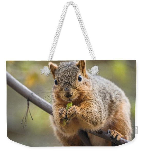 Weekender Tote Bag featuring the digital art Snacking Squirrel by Don Northup
