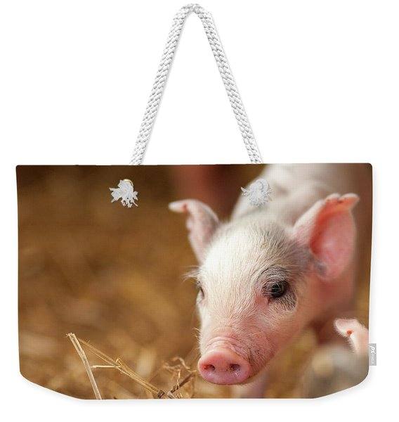 This Little Piggy Weekender Tote Bag