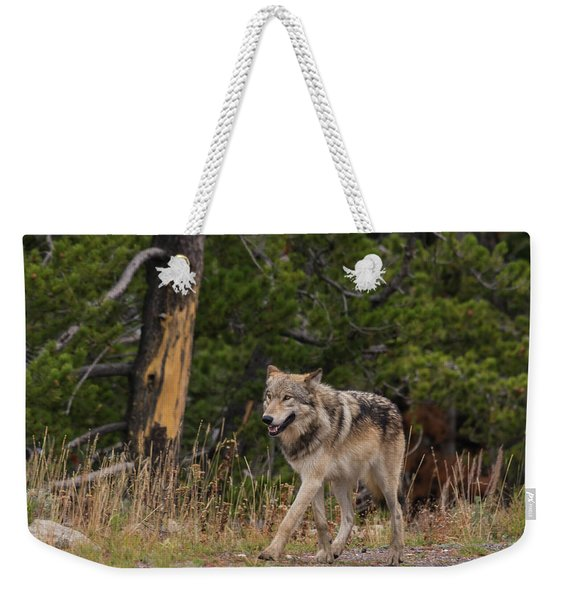 Weekender Tote Bag featuring the photograph W1 by Joshua Able's Wildlife