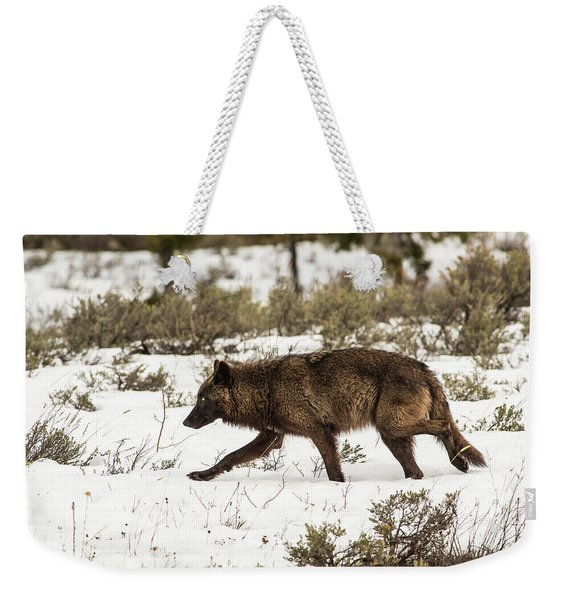 Weekender Tote Bag featuring the photograph W10 by Joshua Able's Wildlife