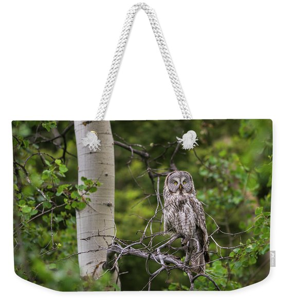 Weekender Tote Bag featuring the photograph B14 by Joshua Able's Wildlife