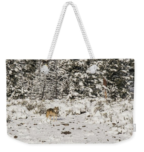 Weekender Tote Bag featuring the photograph W20 by Joshua Able's Wildlife