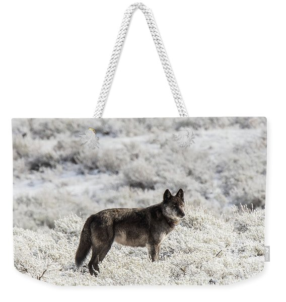Weekender Tote Bag featuring the photograph W23 by Joshua Able's Wildlife