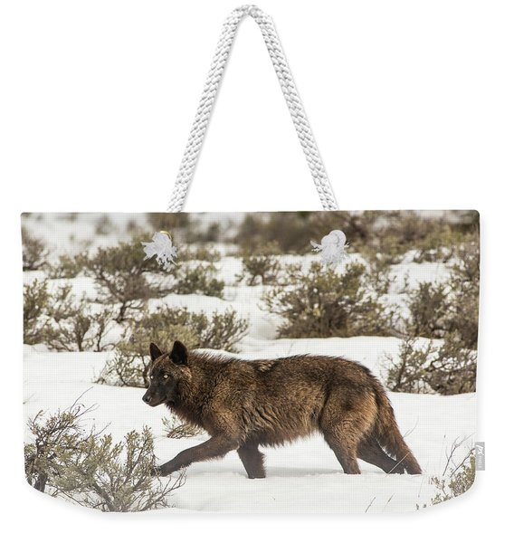 Weekender Tote Bag featuring the photograph W4 by Joshua Able's Wildlife