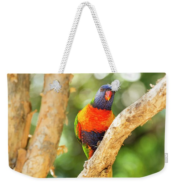 Weekender Tote Bag featuring the photograph Rainbow Lorikeet by Rob D Imagery
