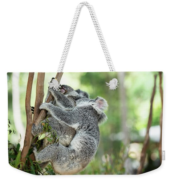 Weekender Tote Bag featuring the photograph Australian Koalas by Rob D Imagery