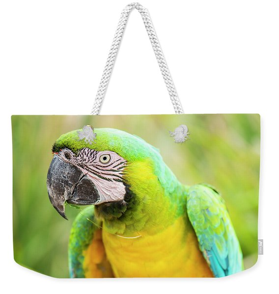 Weekender Tote Bag featuring the photograph Beautiful Macaw Bird by Rob D Imagery