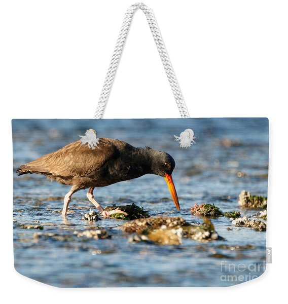 Black Oystercatcher Pacific Coast Weekender Tote Bag