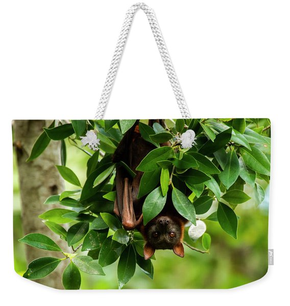 Weekender Tote Bag featuring the photograph Flying Fox Bat by Rob D Imagery