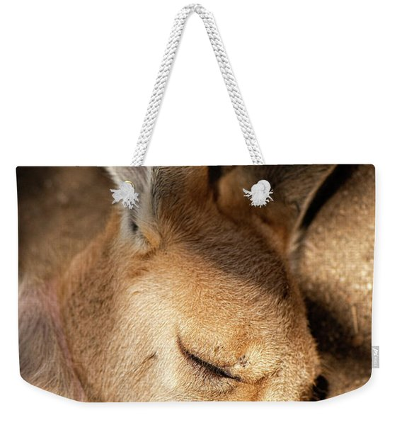 Weekender Tote Bag featuring the photograph Kangaroo Joey by Rob D Imagery