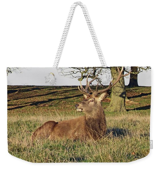 28/11/18  Tatton Park. Stag In The Park. Weekender Tote Bag