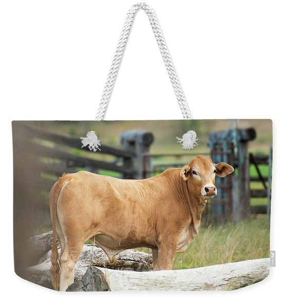 Weekender Tote Bag featuring the photograph Bull In The Country Side. by Rob D Imagery
