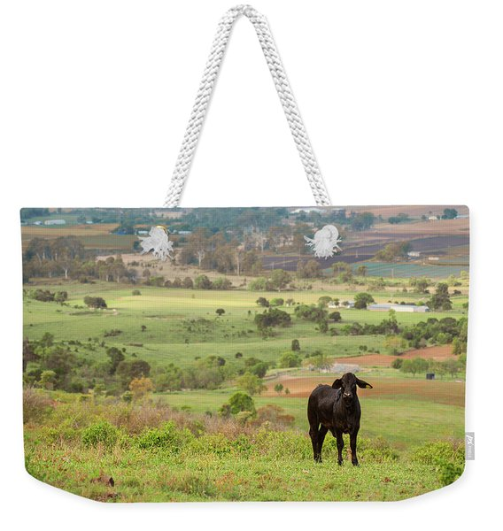 Weekender Tote Bag featuring the photograph Cow Outside In The Paddock by Rob D Imagery