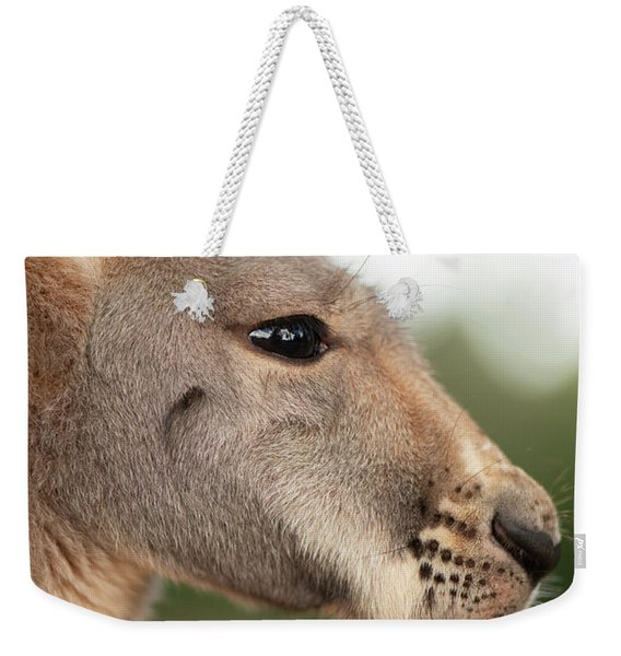 Weekender Tote Bag featuring the photograph Kangaroo Outside During The Day Time. by Rob D Imagery