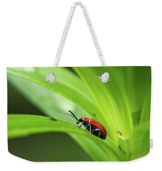 Scarlet Lily Beetle Sitting On A Green Leaf Weekender Tote Bag