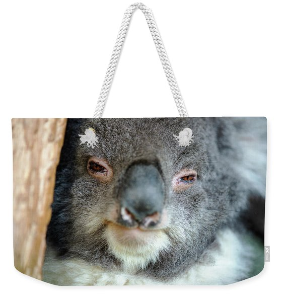 Weekender Tote Bag featuring the photograph Cute Australian Koala Resting During The Day. by Rob D Imagery