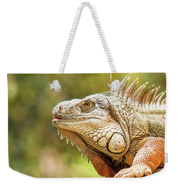 Weekender Tote Bag featuring the photograph Green Iguana by Rob D Imagery