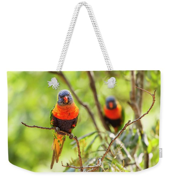 Weekender Tote Bag featuring the photograph Rainbow Lorikeets by Rob D Imagery
