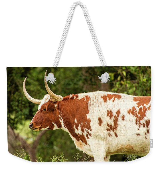 Weekender Tote Bag featuring the photograph Longhorn Bull In The Paddock by Rob D Imagery