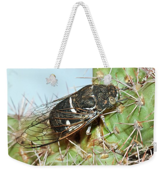 A Cicada Insect On A Cholla Cactus Weekender Tote Bag