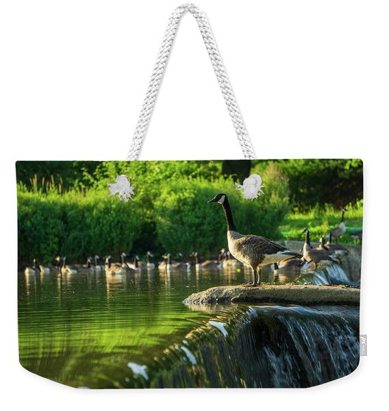 A Gaggle Of Geese Weekender Tote Bag