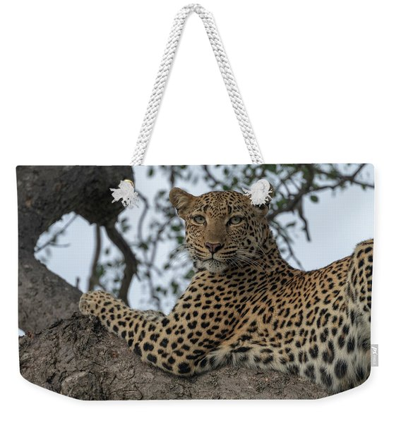 A Leopard Gazes From A Tree Weekender Tote Bag
