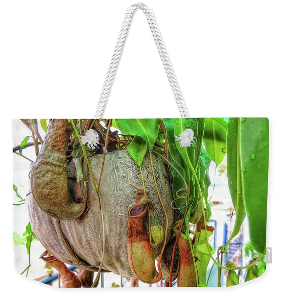 A Pitcher Plant On Our Terrace In Thailand Weekender Tote Bag