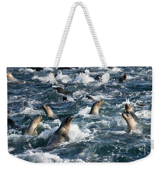 A Raft Of Sea Lions Weekender Tote Bag