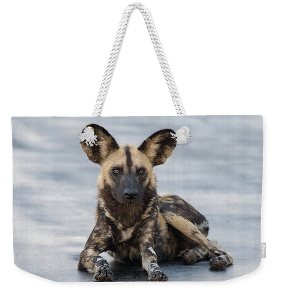 African Wild Dog Resting On A Road Weekender Tote Bag