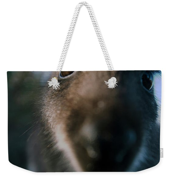 Australian Bush Wallaby Outside During The Day. Weekender Tote Bag