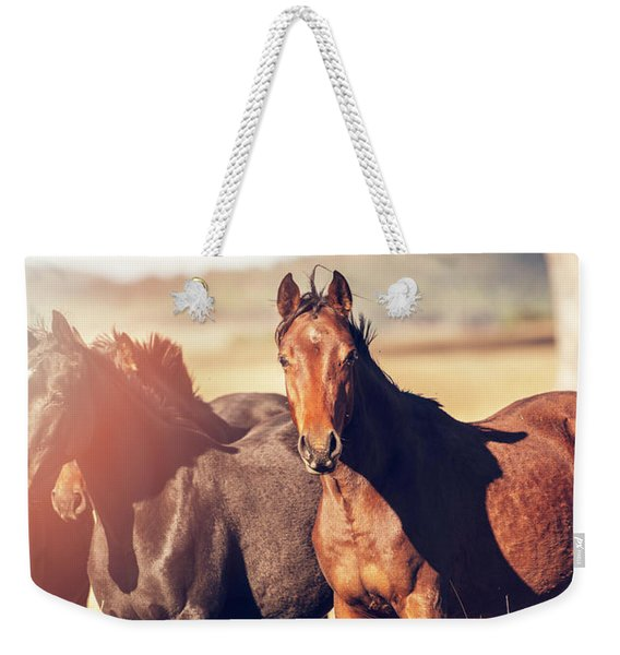 Australian Horses In The Paddock Weekender Tote Bag