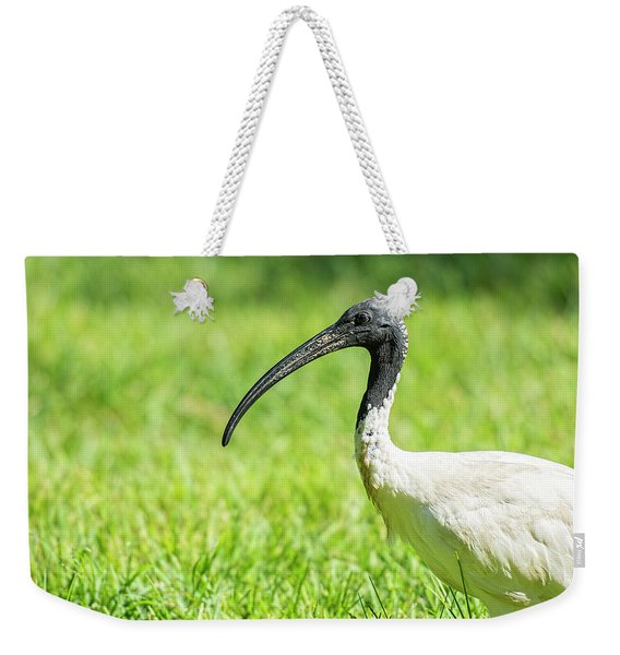 Weekender Tote Bag featuring the photograph Australian White Ibis by Rob D Imagery