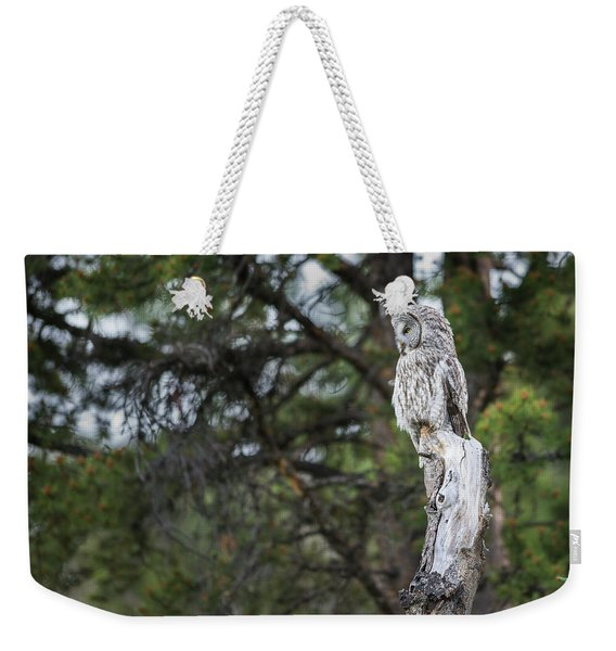 Weekender Tote Bag featuring the photograph B17 by Joshua Able's Wildlife