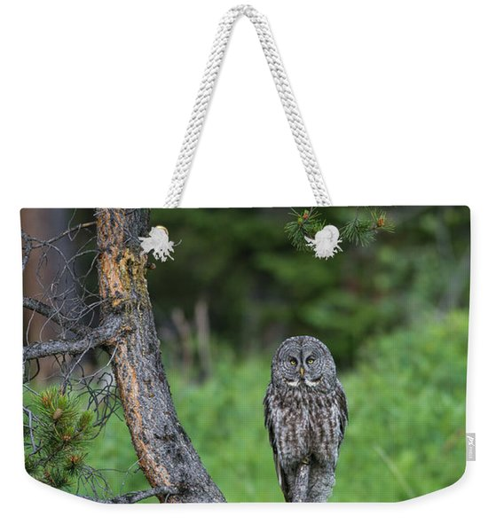 Weekender Tote Bag featuring the photograph B20 by Joshua Able's Wildlife