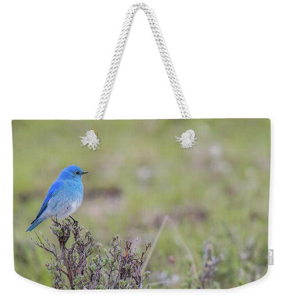 Weekender Tote Bag featuring the photograph B23 by Joshua Able's Wildlife