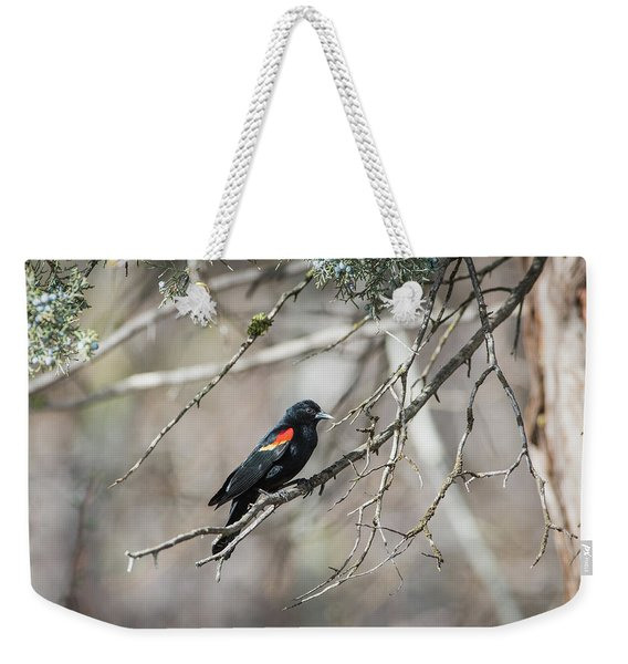Weekender Tote Bag featuring the photograph B26 by Joshua Able's Wildlife