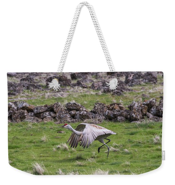 Weekender Tote Bag featuring the photograph B27 by Joshua Able's Wildlife