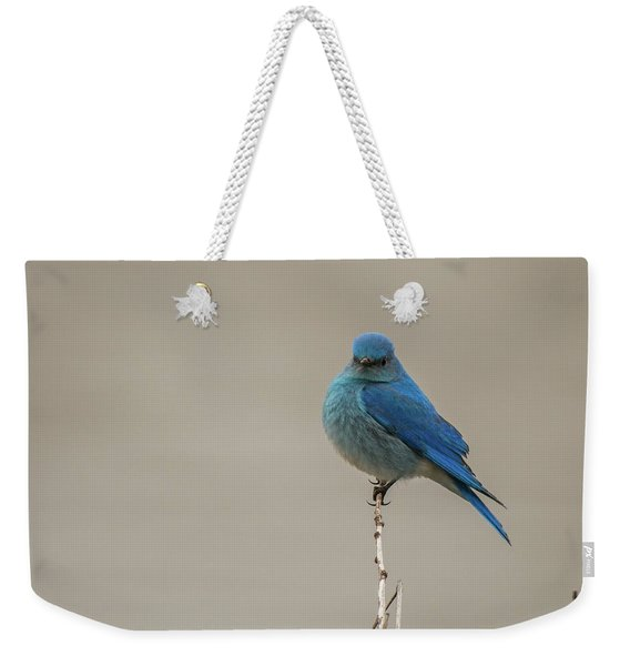 Weekender Tote Bag featuring the photograph B52 by Joshua Able's Wildlife