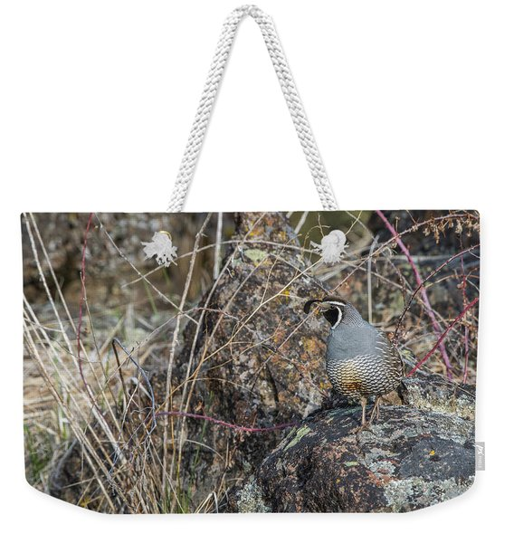 Weekender Tote Bag featuring the photograph B53 by Joshua Able's Wildlife