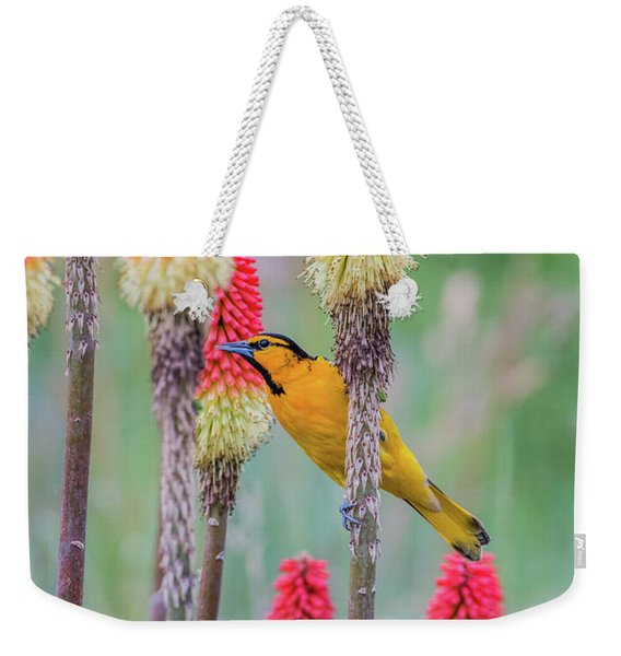 Weekender Tote Bag featuring the photograph B59 by Joshua Able's Wildlife