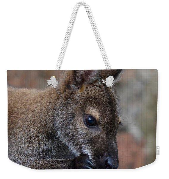 Baby Wallaby Cleaning Himself Weekender Tote Bag