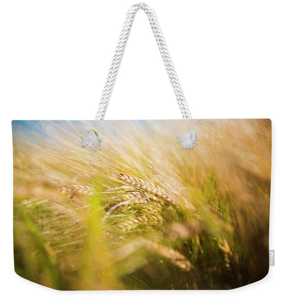 Background Of Ears Of Wheat In A Sunny Field. Weekender Tote Bag