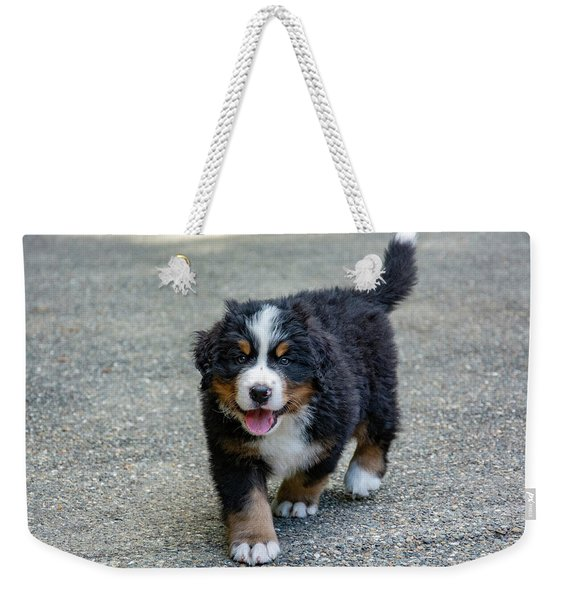 Bernese Mountain Dog Puppy 2 Weekender Tote Bag